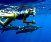 Hawaii Dolphin Snorkel Tour