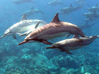 hawaii dolphin tours